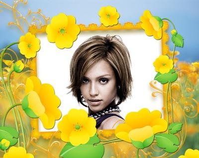 Żółte kwiaty jaskry