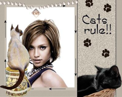 Котки Котките управляват