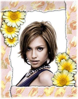 Fleurs Marguerites jaunes
