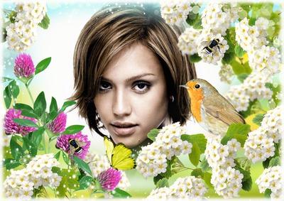 Bird Dabas Ziedi