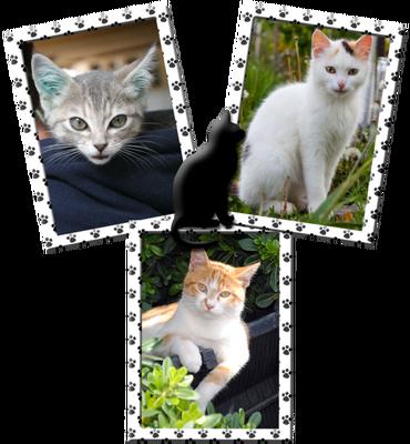 Cat 3 foto's