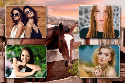 4 foto's paardencollage