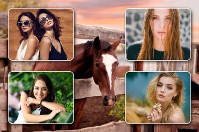 Kolaż 4 zdjęcia konia