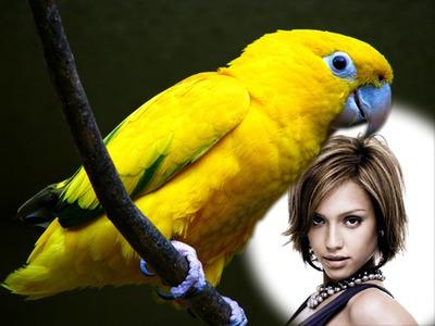 Scen parakiter Parrot
