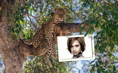 Πλαίσιο με λεοπάρδαλη