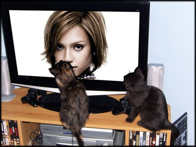 Flat screen and cats Screen