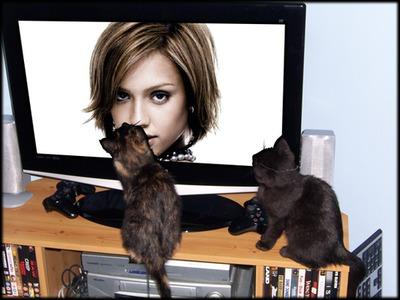 Escena Pantalla plana y gatos