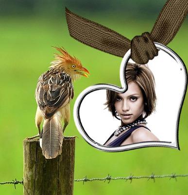 Сцена птицы Сердце ♥