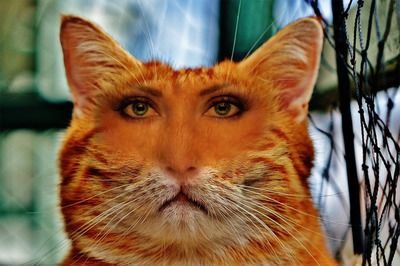 cabeza del gato