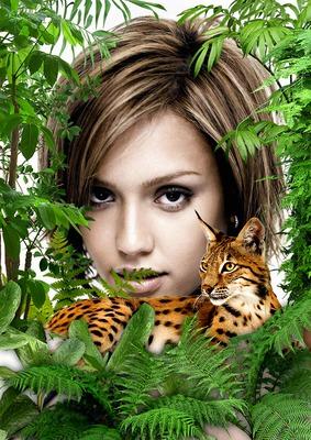 Lynx dans la jungle