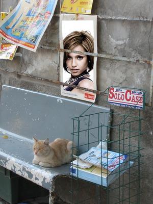 Scène Affiche dans la rue Chat