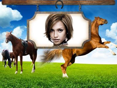 Equitación Caballos