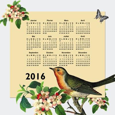 Calendario 2016 naturaleza pájaro y mariposa