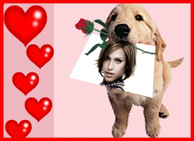 Puppy dan hati