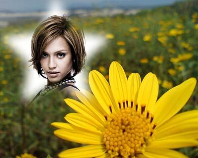 Желтый цветок звезды