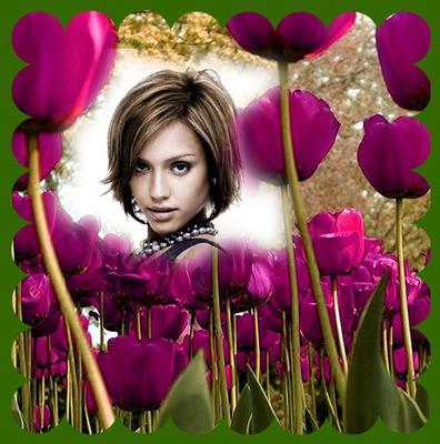 Lyserøde tulipaner