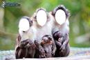 monkeys 1 2 3