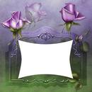 cadre fleurs violette