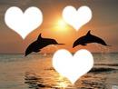 Dauphins devant le soleil couchant