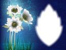 Fleurs-nature
