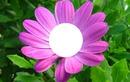 flor / fiore