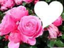 Bonne féte a toutes les  Mamans!