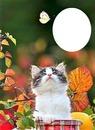 kitty & butterfly