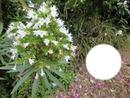 Fleur blanche du jardin botanique sur Gran Canaria
