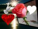 Je t'aime D'amour*