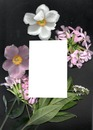 fleurs avec cadre rectangulaire une photo