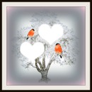 arbre amour oiseaux