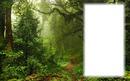 Erdő tájkép
