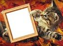 Podzim, kotě
