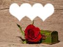 Coffret - rose rouge