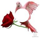 mi paloma mensajera