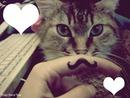 chat-chat ou charlie chaplin