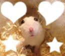 hamster 4 photo