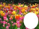 flores rosas e amarelas