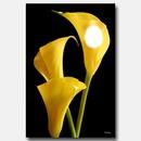 arum jaune