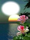 Coucher de soleil-roses-nature