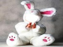 Bebe lapin blanc
