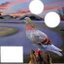 cadre oiseaux