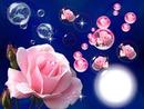 Cadre roses et bulles