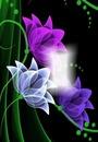 Cc flores pintadas ll