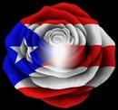 Rosa con los colores de Puerto Rico