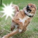 Cachorrinho doidinho com sua foto