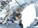 le loup a la riviére
