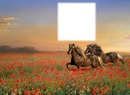 cheval coquelicot