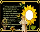 if sunflowers grow in heaven
