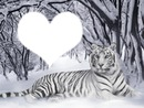 jaime les tigres